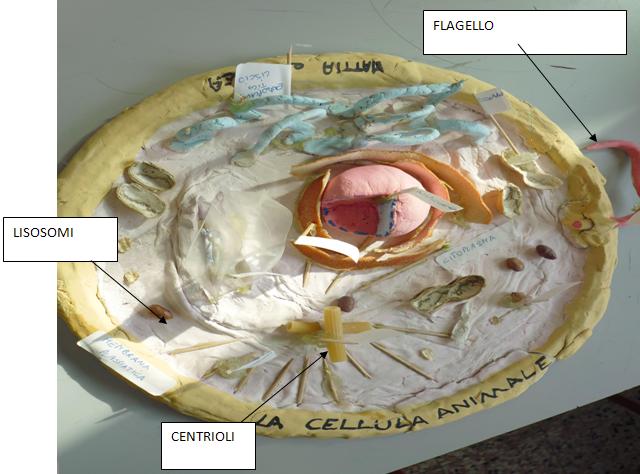 Cellula6